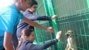 Ankara'daki Çocuklara Yönelik, Hayvan Sevgisi Etkinliği