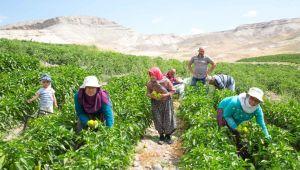 Bitki Koruma Ürünleri, Çiftçilere Verilecek