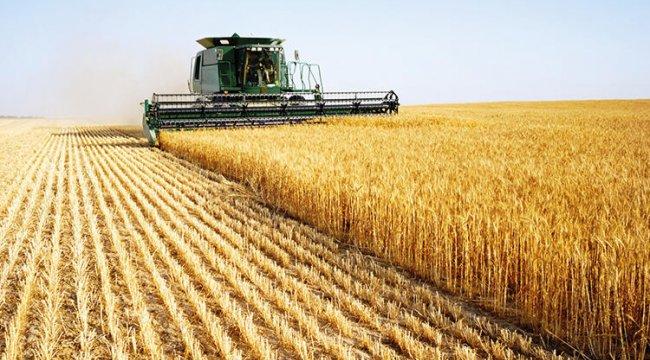 Buğday rekoltesi artıyor