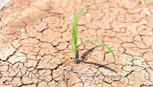 İklim değişikliği tarım sektörünü etkiliyor