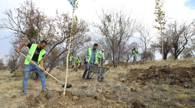 Bademlidere'ye 20 bin ağaç